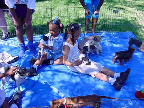 Puppy Petting Zoo Happiness Unlimited Parties Inc